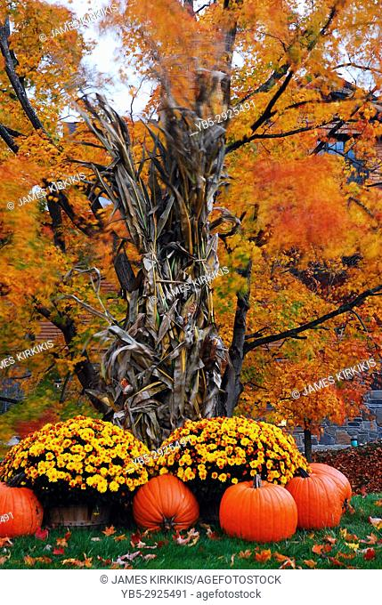 Pumpkins and Mums serve as autumn décor at a park in Manchester, Vermont