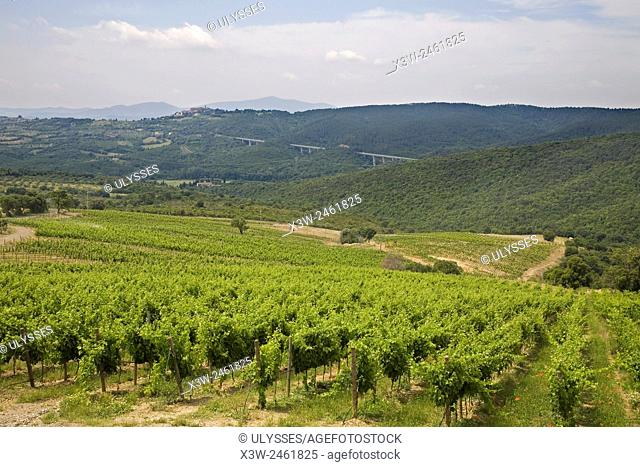 europe, italy, tuscany, casal di pari area, wineyards