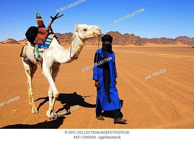 Tuareg nomad leading his dromedary across a vast plain in the Acacous Mountains, Sahara desert, Libya