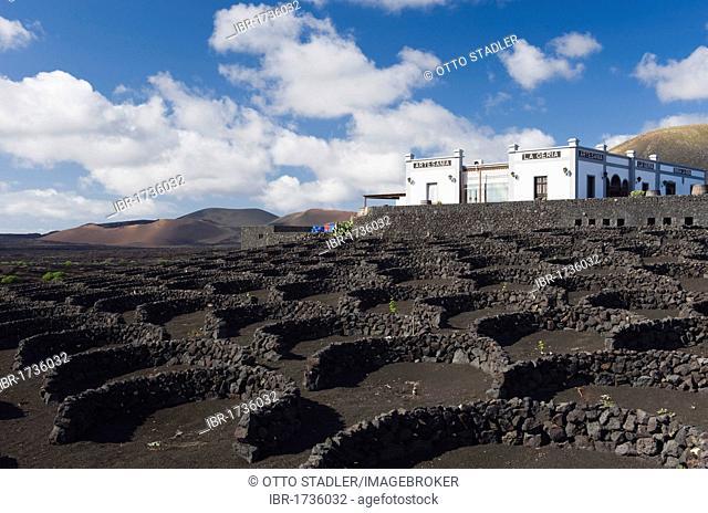 Vineyard, winery, wine-growing, dryland agriculture on lava, La Geria, Lanzarote, Canary Islands, Spain, Europe