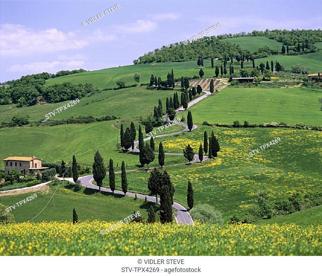 Countryside, Cypress, Holiday, Italy, Europe, Landmark, Road, Toscana, Tourism, Travel, Trees, Tuscany, Vacation, Val d'orcia, V