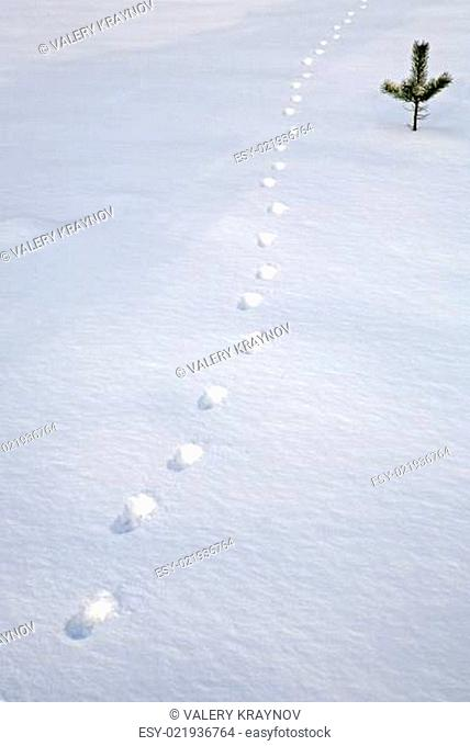 traces in the snow