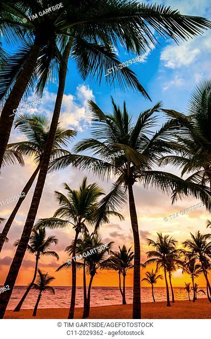 beach; Riu Palace; hotel; Punta Cana; Dominican Republic; Caribbean