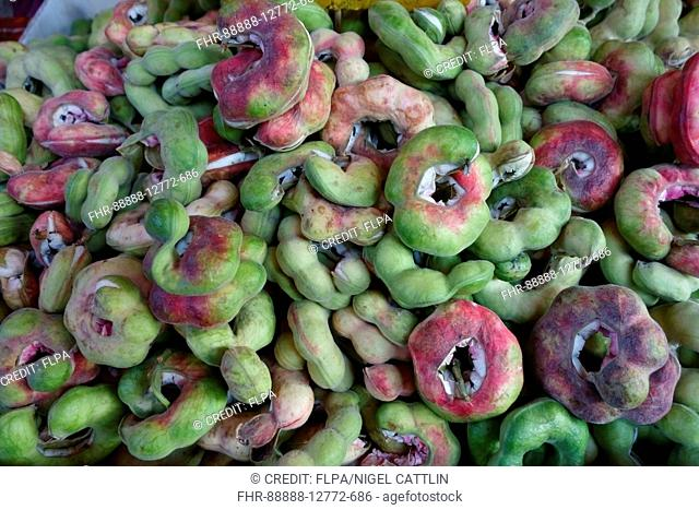 Manila tamarind, Pithecellobium dulce, seedpods for sale in food market, Bangkok, Thailand, February