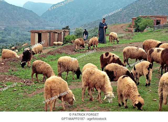 BERBER SHEPHERDS WITH THEIR FLOCK, TERRES D'AMANAR, TAHANAOUTE, AL HAOUZ, MOROCCO