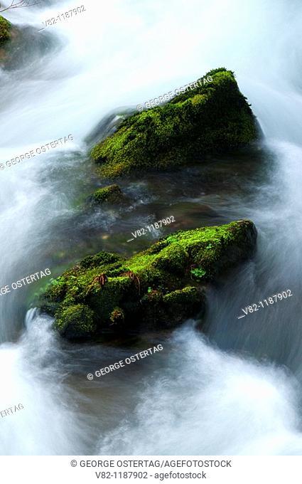 Kentucky Creek on Kentucky Falls Trail, Kentucky Falls Special Interest Area, Siuslaw National Forest, OR