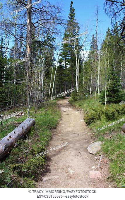 A dirt path in a forest on the Wild Basin Trail in the Rocky Mountain National Park, Colorado, USA