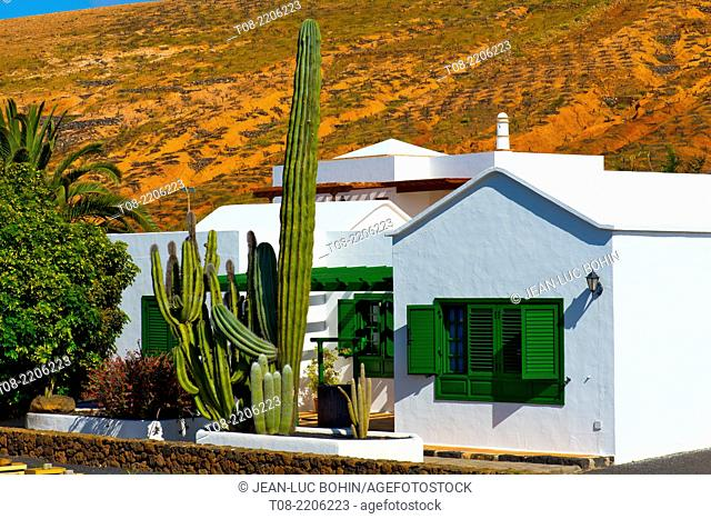 spain; canary islands; lanzarote : north west coast, cactus and house