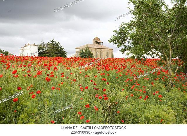 Las Lagunas de Villafafila, one of the most important wetlands of northern. Spain Zamora province Castile and Leon
