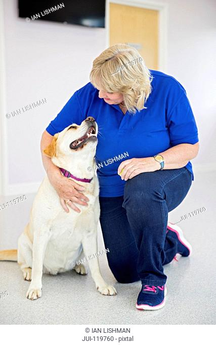 Labrador pet dog with vet in surgery