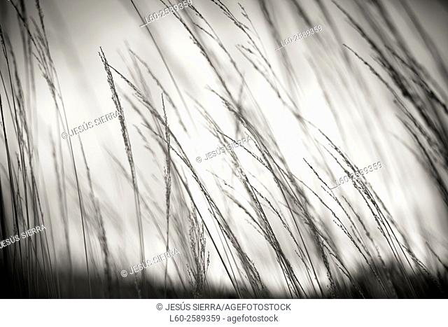 Abstract nature