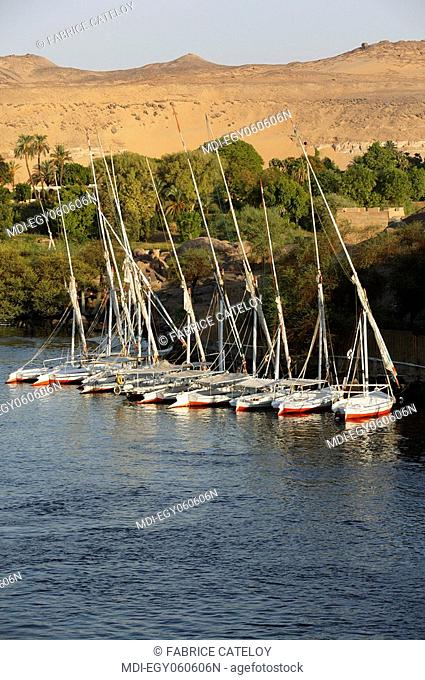 Felouqes lined up along the Elephantine Island on the Nile