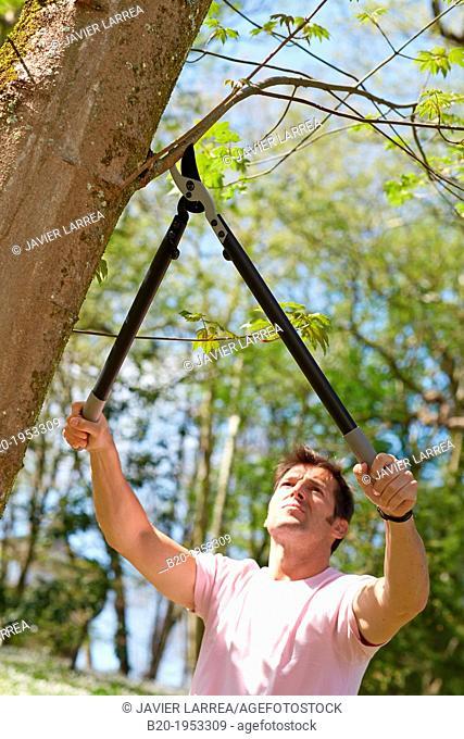 Gardener pruning tree, Pruning secateurs, Hand tool, Garden,