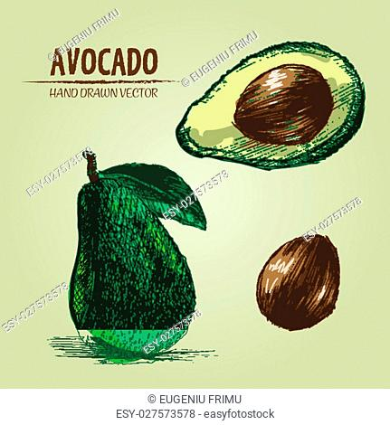 Digital vector detailed color avocado hand drawn retro illustration collection set. Thin artistic linear pencil outline. Vintage ink flat style