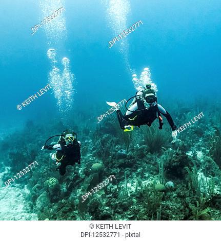 Scuba divers at Joe's Wall Dive Site, Belize Barrier Reef; Belize
