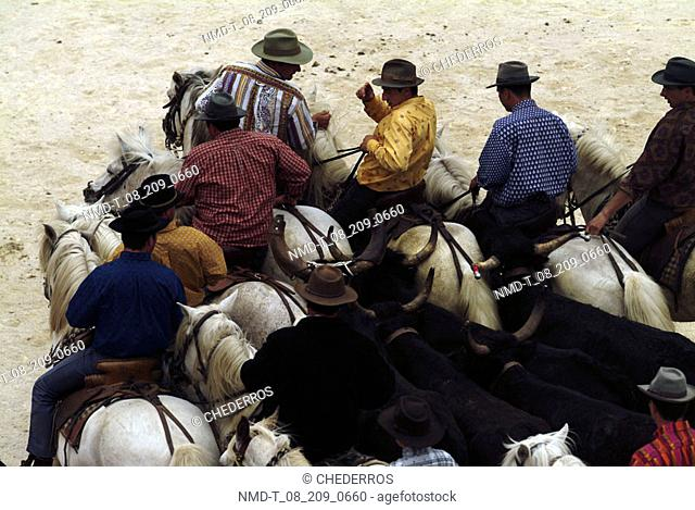 High angle view of cowboys gathering up cattle, Provence, France