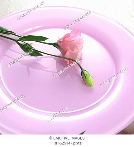 Flower on a pink plate
