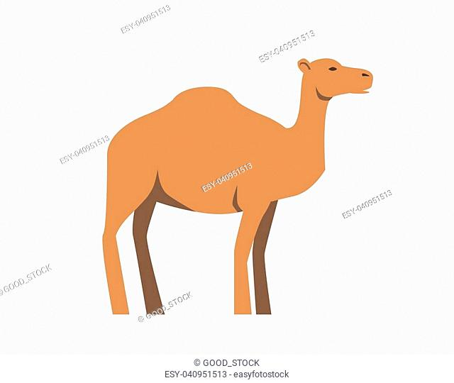 Camel, ship of desert. Flat vector illustration. Isolated on white background