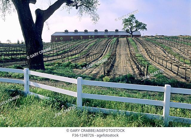 Oak tree and rail fence at Robert Hall Winery, Paso Robles San Luis Obispo County, California
