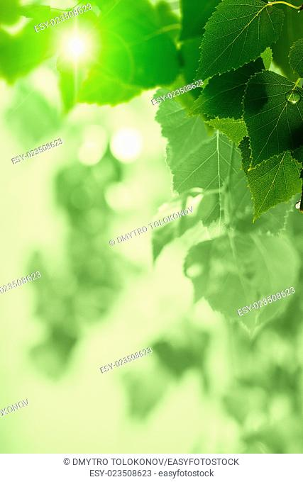 After the rain. Abstract seasonal backgrounds with green foliage and water drops