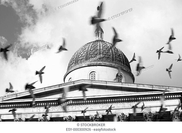 Birds Flying In Front Of The National Gallery, London, England