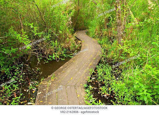 Boardwalk, Tennant Lake County Park, Ferndale, Washington