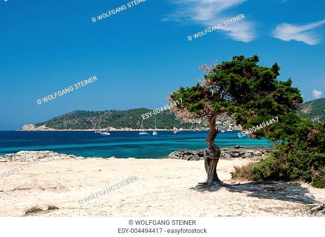 Baum in Herzform vor der Küste auf Ibiza
