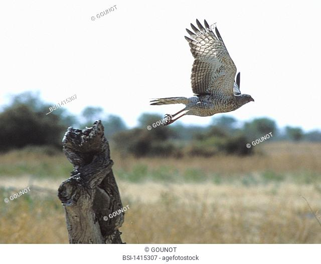 BIRD Bird in Etosha National Park in Namibia
