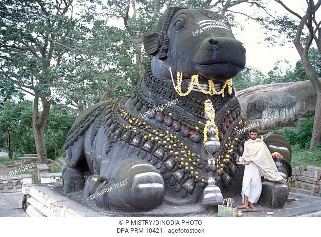 bull chamundi in mysore at karnataka India