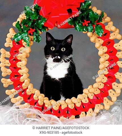 Cat with dog bone Christmas wreath