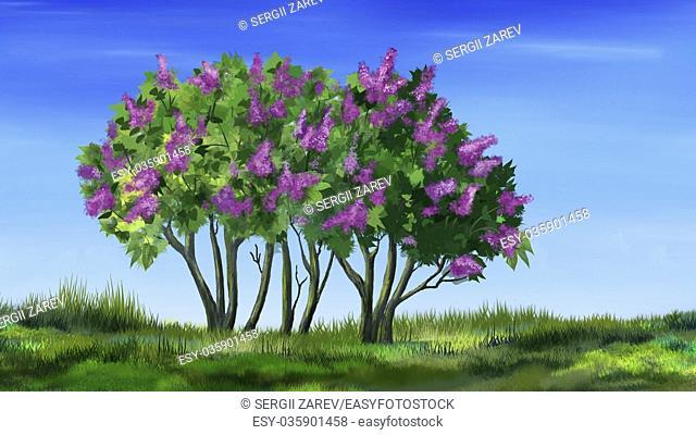 Digital painting of the Lilac Tree or Syringa vulgaris