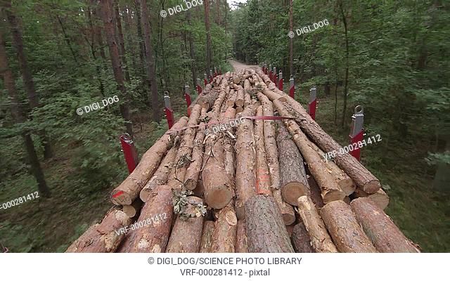 Logs that have been cut from trees being transported on a truck through the forest