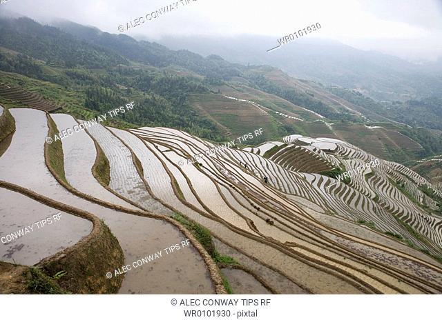 China, Guangxi Province, Guilin. Longsheng terraced ricefields
