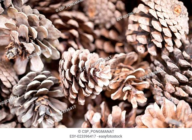 Pinecones background texture for decorations