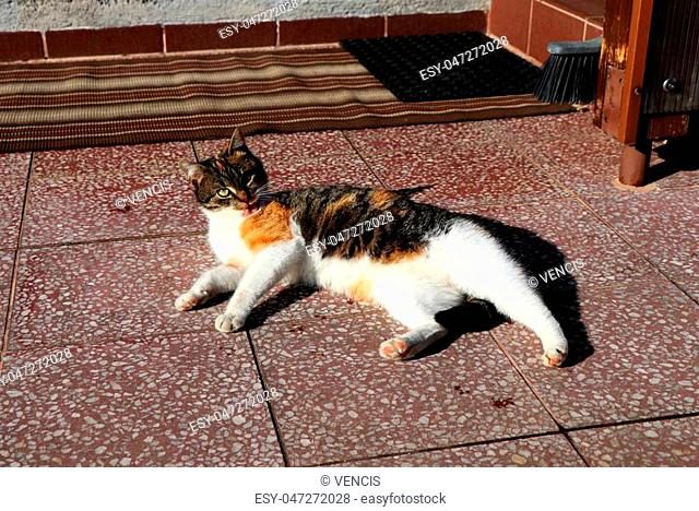 Color cat is cleaning herself and heat on the red tiles