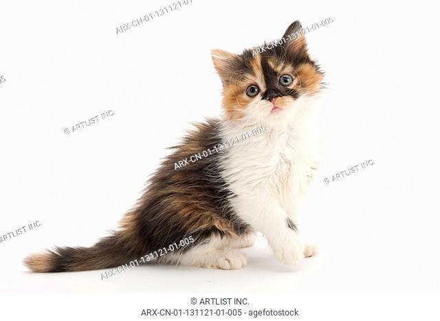 A sitting kitten