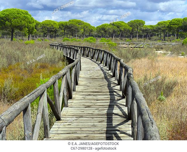 Board walk in Parque Nacional de Doñana, Almonte, Spain