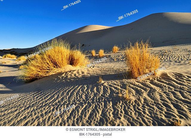 Sand dune of Erg Tihodaine, Wilaya Tamanrasset, Algeria, Sahara, North Africa