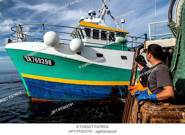 BOARDING BETWEEN TWO BOATS TO TRANSPORT THE LIVING SHRIMPS TO THE WHOLESALE FISH MARKET, SEA FISHING ON A SHRIMP TRAWLER