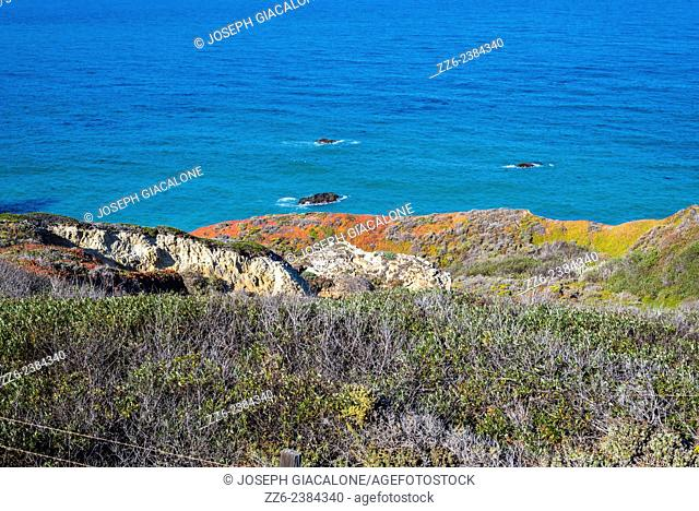 Colorful chaparral above the Big Sur coastline. California, United States