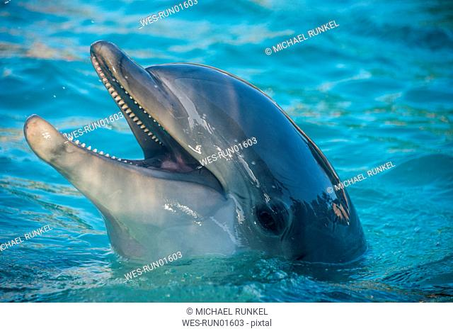 Dolphins At San Diego Zoo Stock Photos And Images Age Fotostock