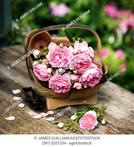 Garden trug basket filled with Roses on rustic wooden table