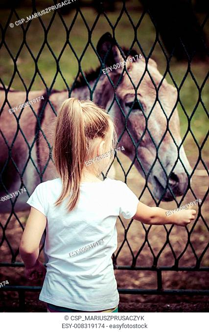 Beautiful little girl feeding donkey