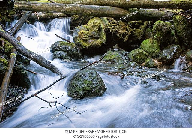 Water cascades over rocks to create mini waterfalls in a Northwest forest