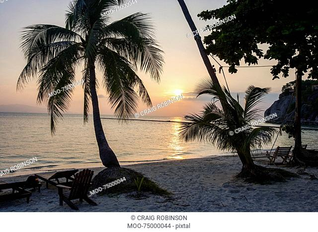 Palm trees and deck chairs on beach at sunset, Koh Pha Ngan, Thailand