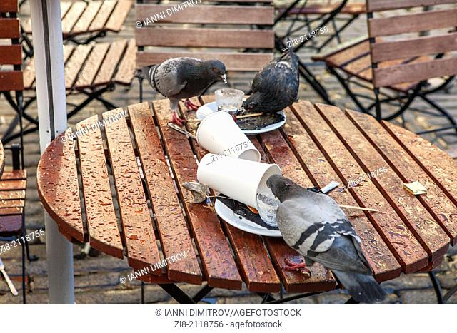 Pigeons scavenge food from coffee shop table in Central London,England