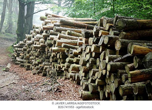 Logs, Belate, Baztan Valley, Navarra, Spain