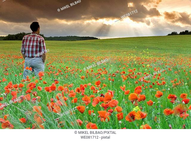 Man watching storm clouds on a poppy field