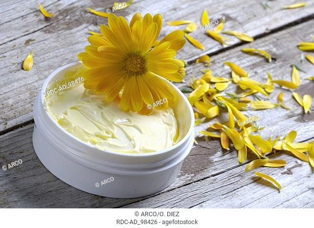 Garden Marigold ointment Calendula officinalis