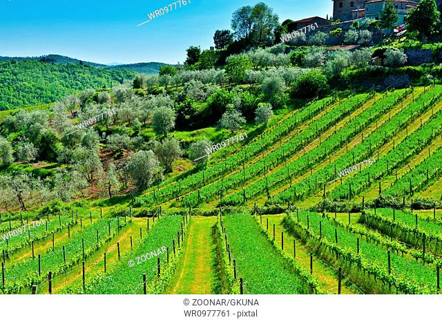 Vineyard and Olive